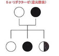 M字ハゲの遺伝様式