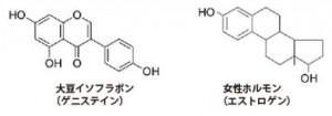 イソフラボンは植物性エストロゲン