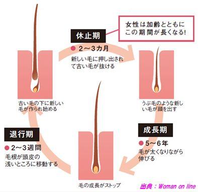 がん脱毛が回復するメカニズム