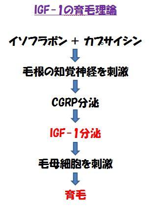IGF-1の育毛理論の図