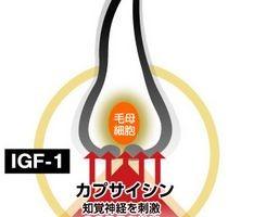 IGF-1の育毛作用