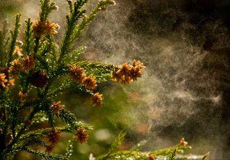 頭かゆいのは花粉