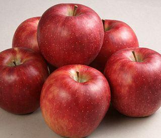 リンゴポリフェノールの育毛効果について検証します