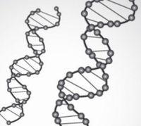 AGAの遺伝を遺伝子診断で判定
