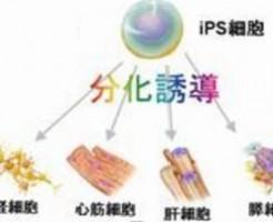 シャンテリーの幹細胞を用いた育毛エステ