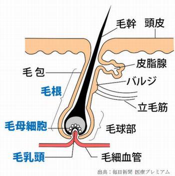 グリコのガムのポスカに育毛効果があることが判明