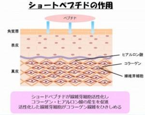 大阪大学がショートペプチドの育毛剤を開発中