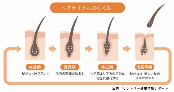 男性の薄毛と年齢の関係を知るにはヘアサイクルを理解してください