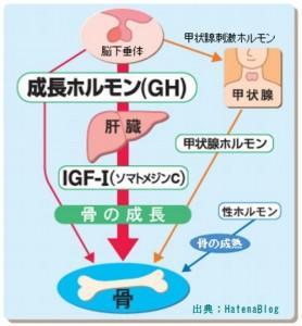 薄毛解消には睡眠の質によるIGF-1の分泌が重要