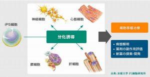 日本の毛髪再生医療