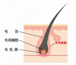 薄毛の解消には亜鉛が効果があります