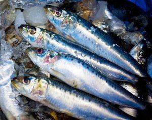 イワシは核酸食事法の中心で薄毛が少ない漁師に好まれている