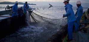 イワシを食べる漁師では薄毛が少ない