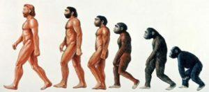 類人猿も秋に抜け毛が多かった